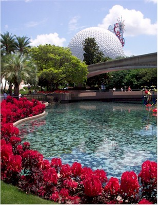 Epcot flowers